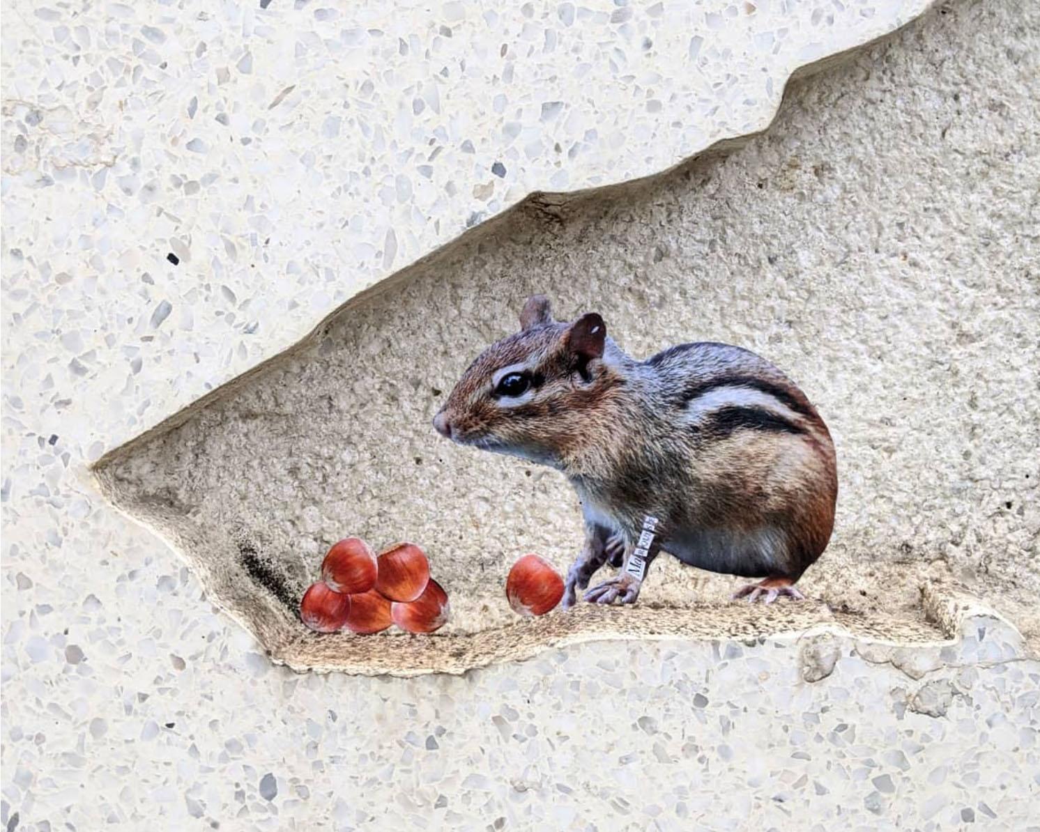 marquise opera muro scoiattolo