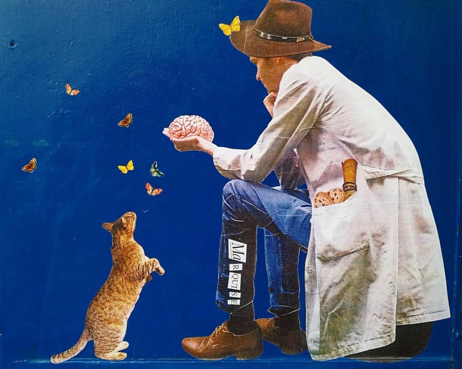 opera marquise gatto muro